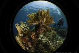 Alor Diving- Marcel at LP Kepa